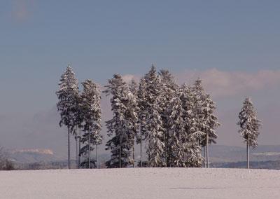 Winterbild Tannen