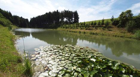 Sehenswuerdigkeiten-Grabenwaldsee